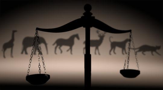 Primer cumplimiento en La Rioja a pena de prisión por maltrato animal